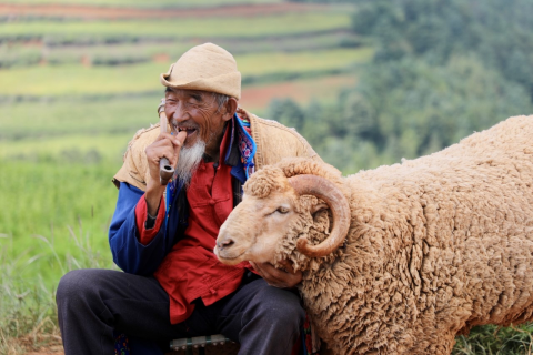 A senior farmer in Dongchuan, Yunnan taking a break from the intensive farm work with his sheep while discussing with his colleagues how to adjust the seeding cycle next year to ensure higher production. In the background are terraced fields where various