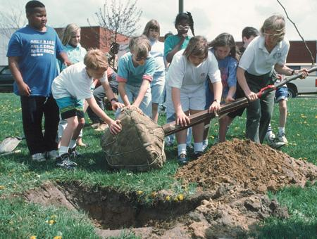Image of tree planting